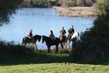 Doñana Ecuestre - Horse Riding in Huelva, Spain.